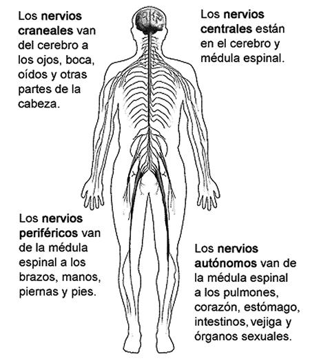 Mantenga sano su Sistema Nervioso.